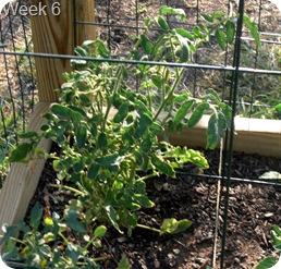 Garden, Week 6